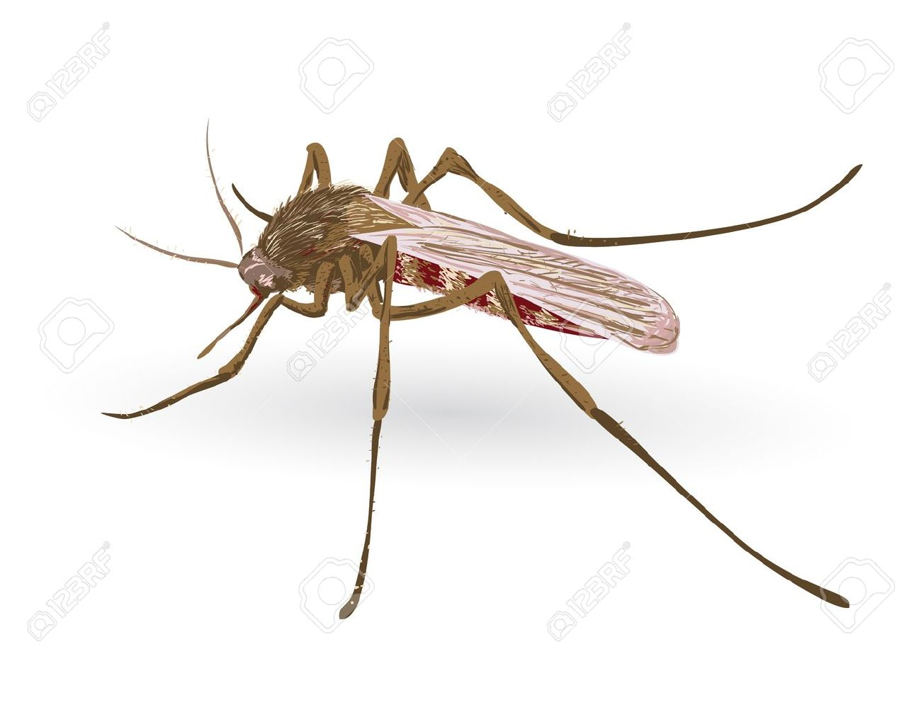 3 373 malaria mosquito stock vector illustration and royalty free