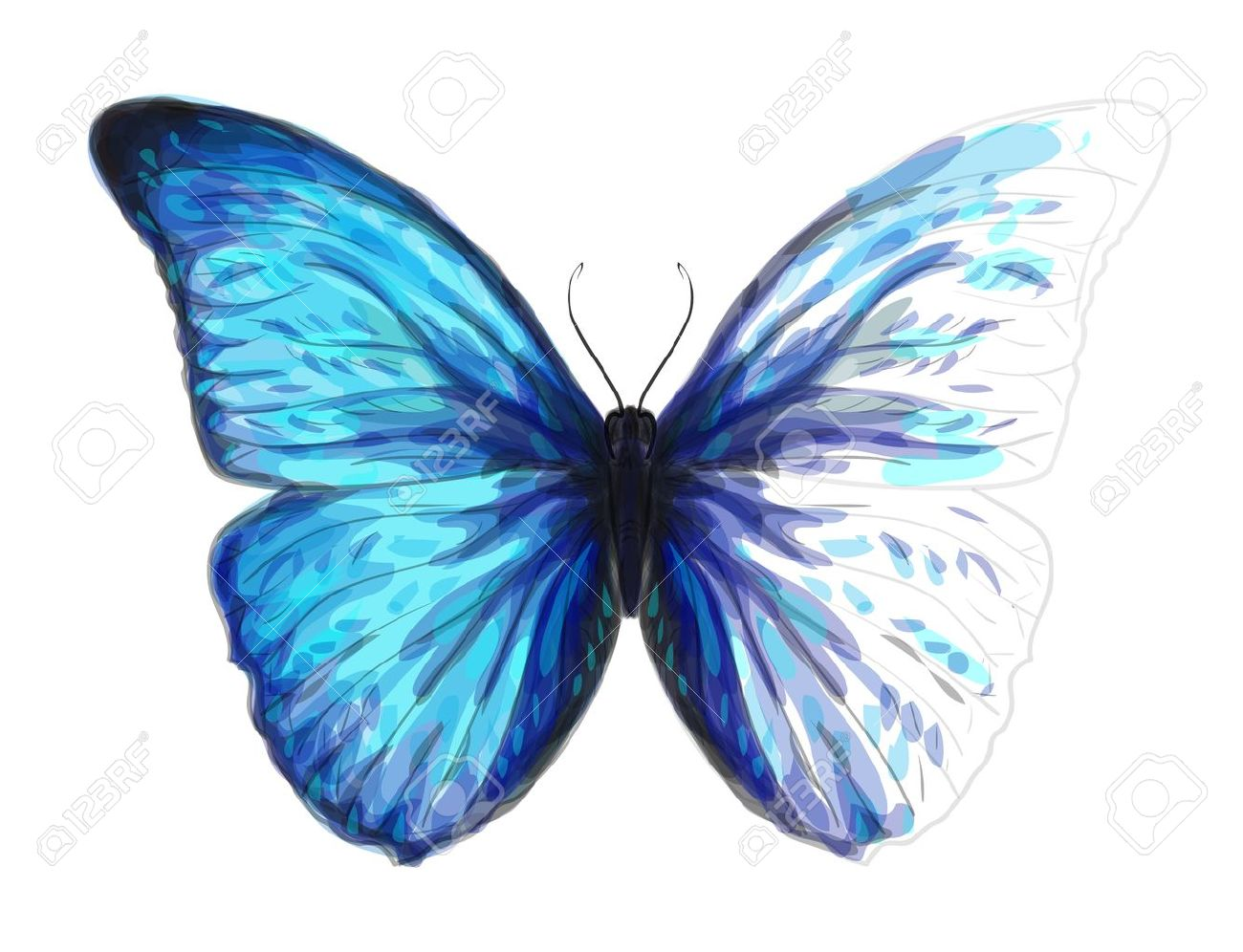 Butterfly  Morpho Anaxibia  Unfinished Watercolor drawing imitation Stock Vector - 13951287
