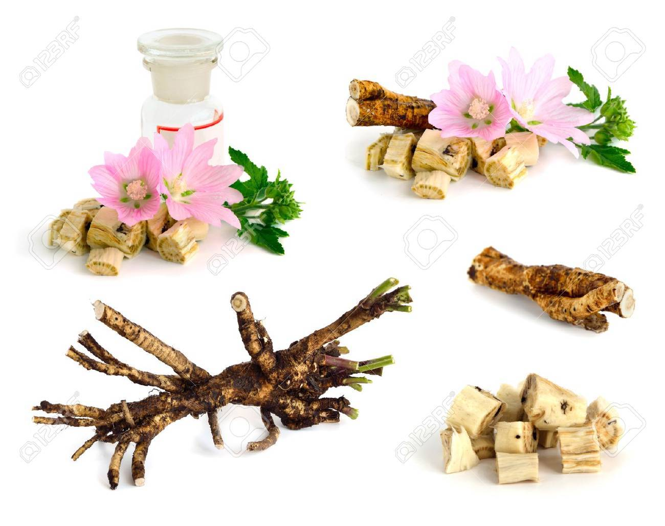 Flowers and roots Althaea (genus) on white background. Stock Photo - 20380034