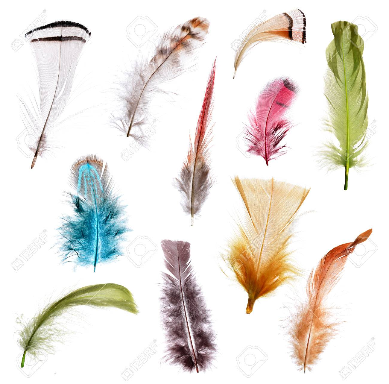 ostrich feathers stock photos u0026 pictures royalty free ostrich