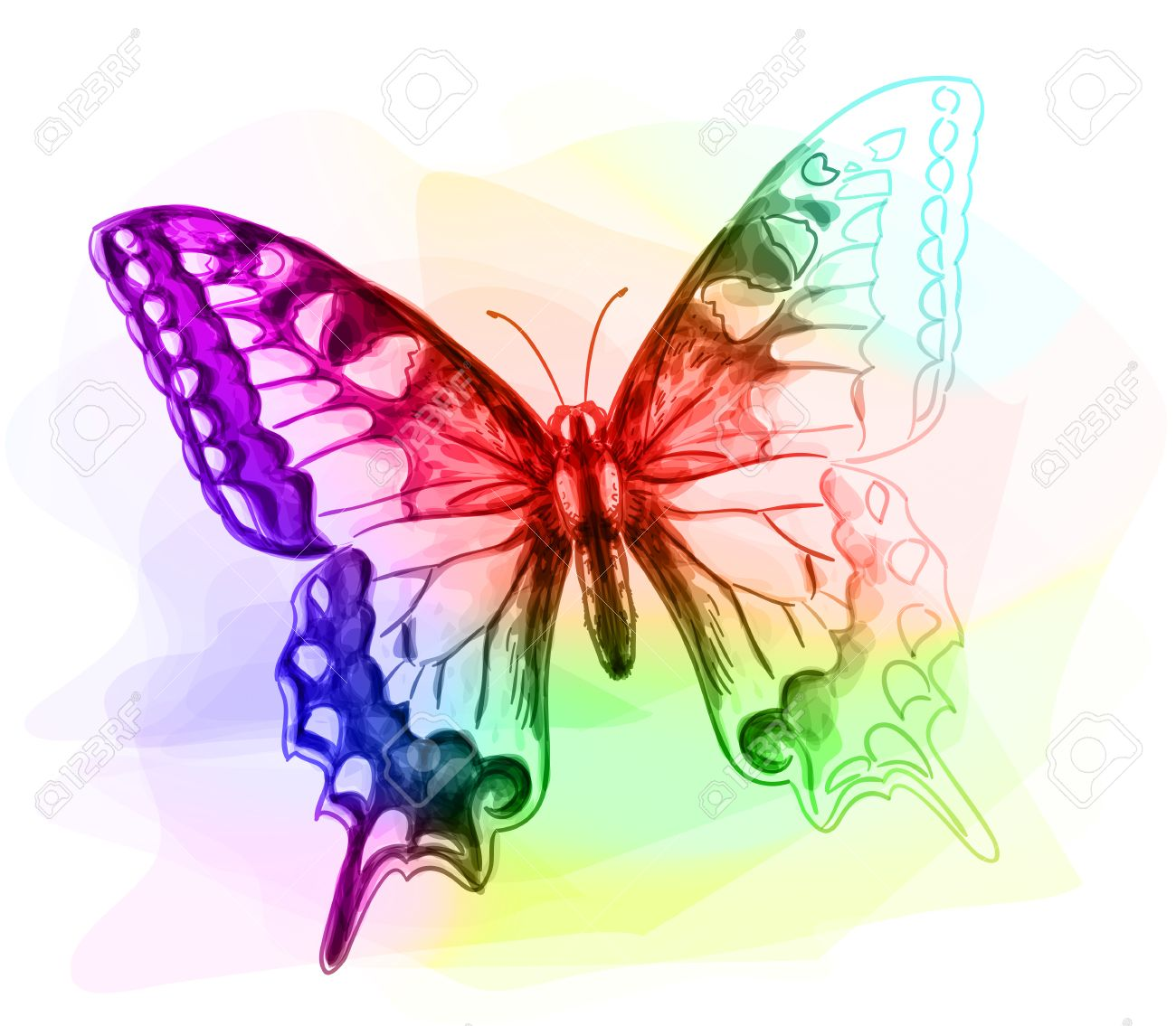 butterfly iridescen colours unfinished watercolor drawing