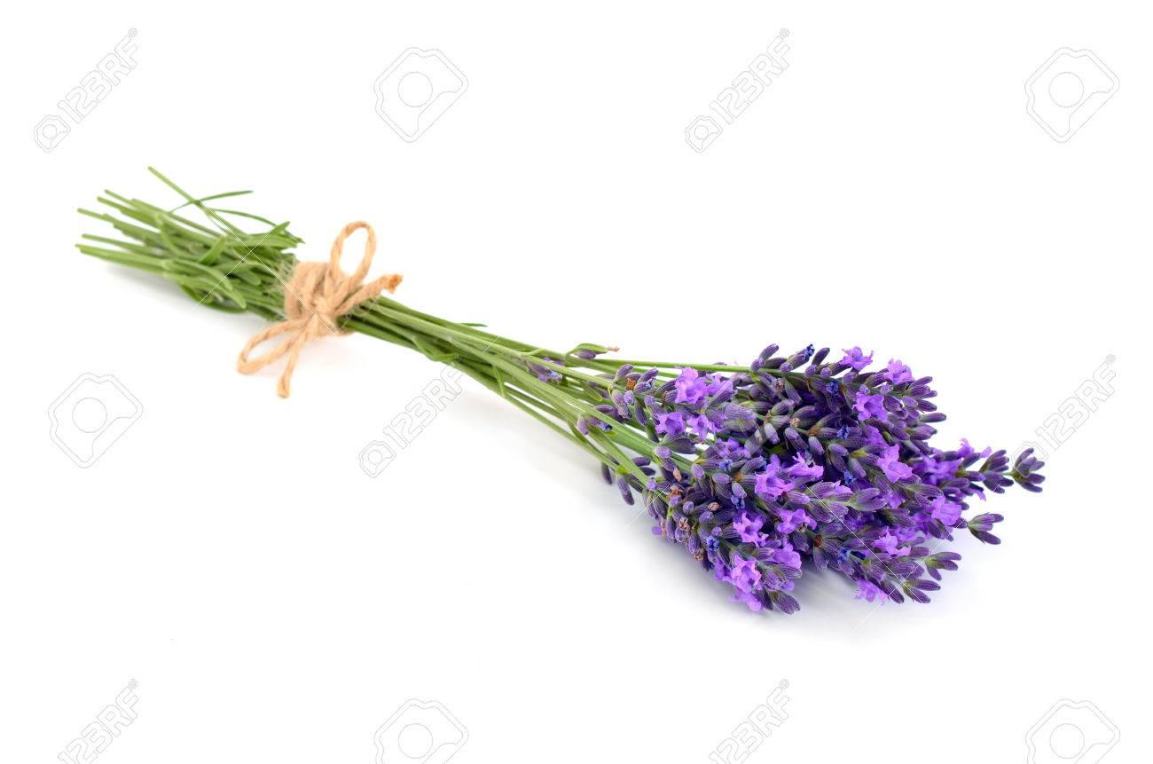 Lavender bunch with a jute rope. Isolated on white background. - 44811233