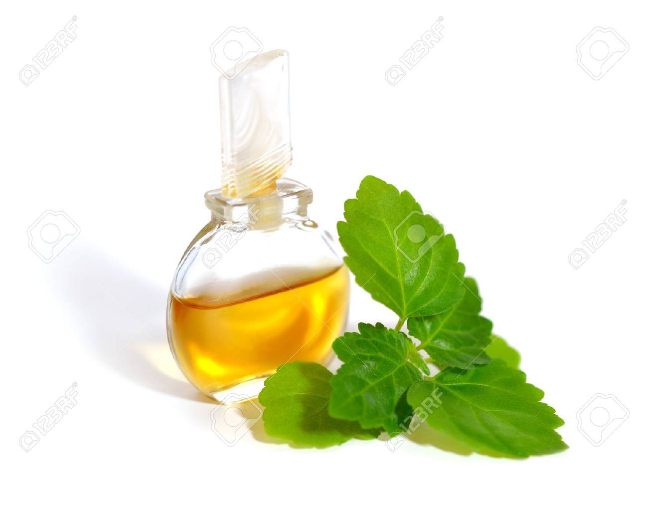 Patchouli sprig with essential oil. Isolated on white background. - 61672049