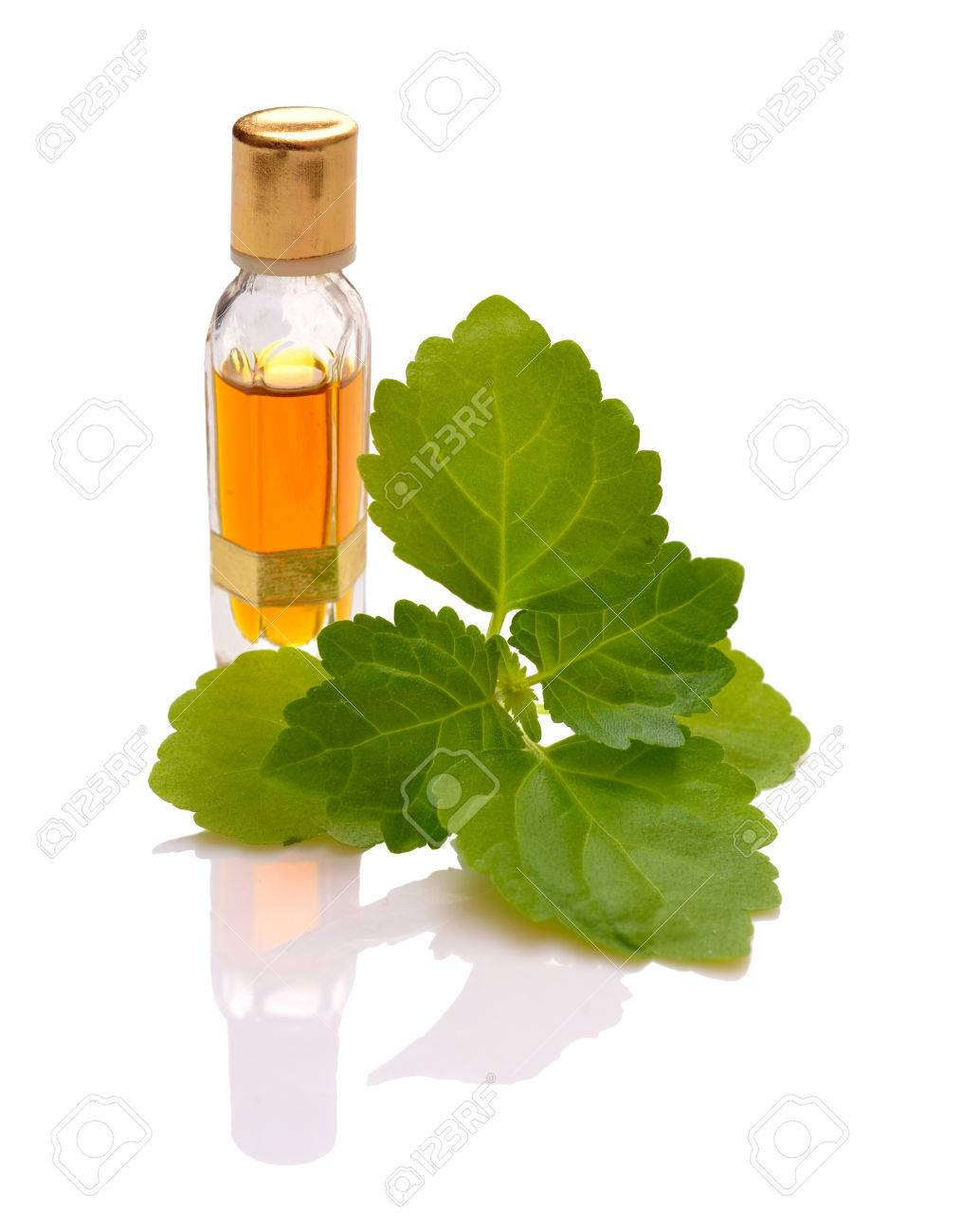 Patchouli sprig with essential oil. Isolated with reflection on white background. - 61674179