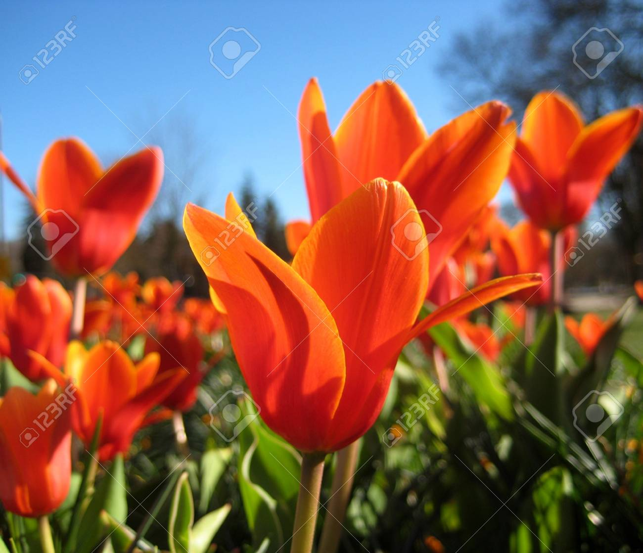 Macro Photo With Bright Spring Flowers On A Background Of Green