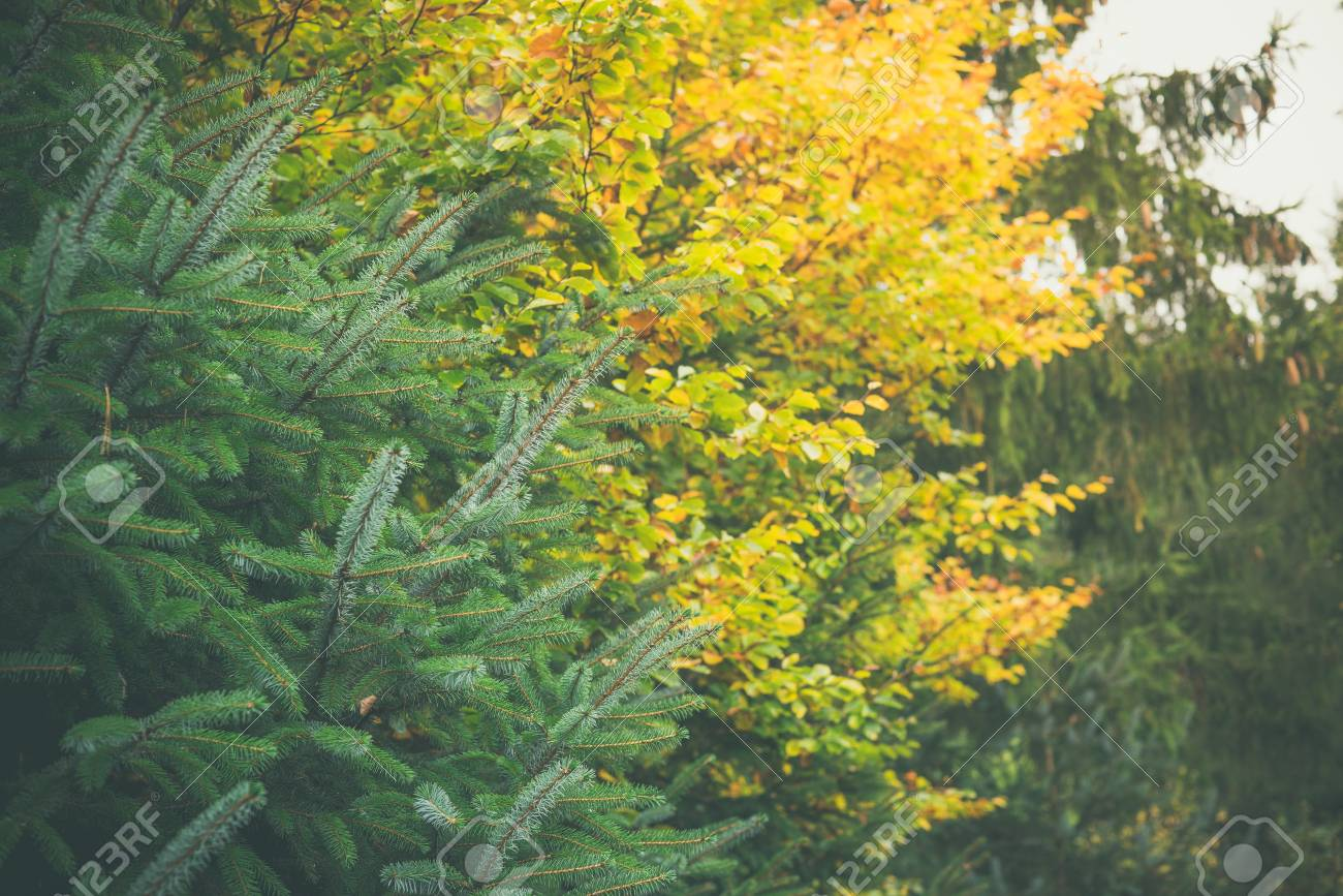 Trees In A Forest In Yellow And Green Colors In The Fall Stock Photo ...