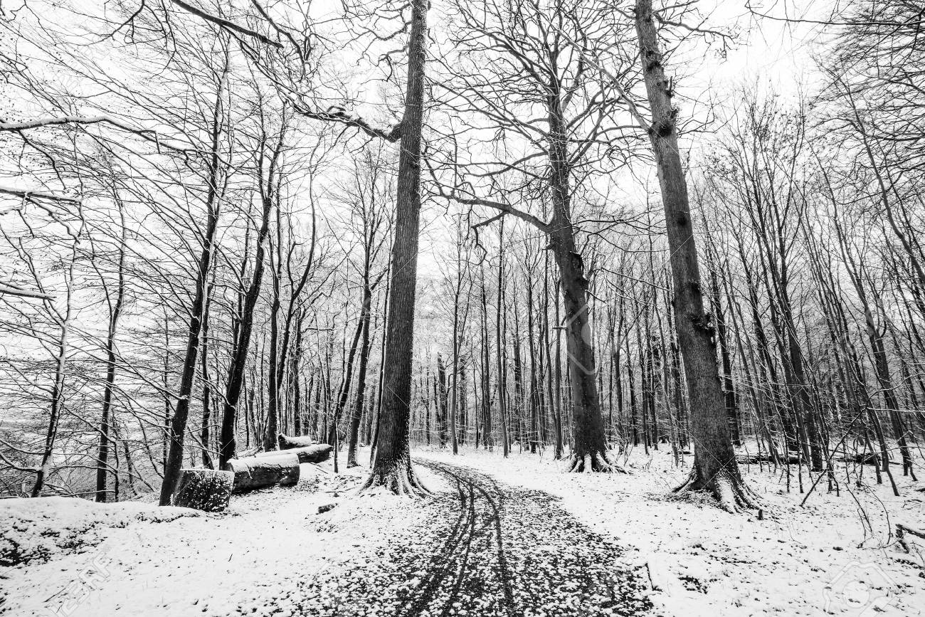 Stock photo winter scenery of a forest covered in snow in black and white colors