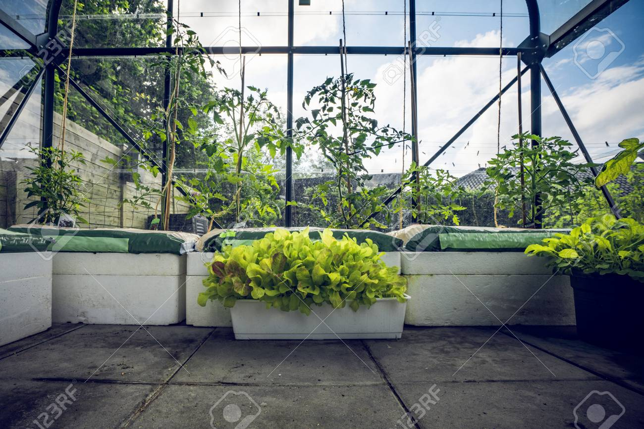 Sensational Green Plants In A Small Greenhouse In A Garden With Blue Sky Interior Design Ideas Philsoteloinfo