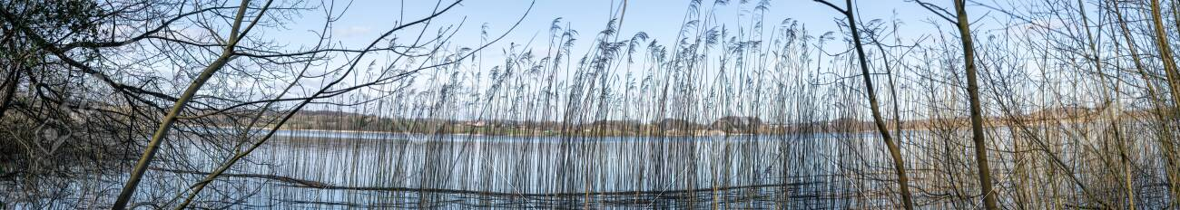 Panorama scenery with rushes by the shore of a lake in the autumn - 142232408