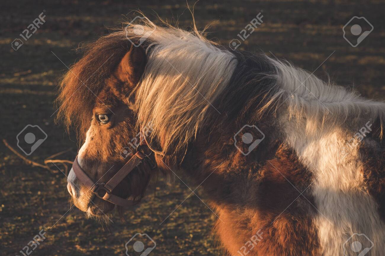 Horse in the autumn sun on a field at dawn with a special eye - 143854884