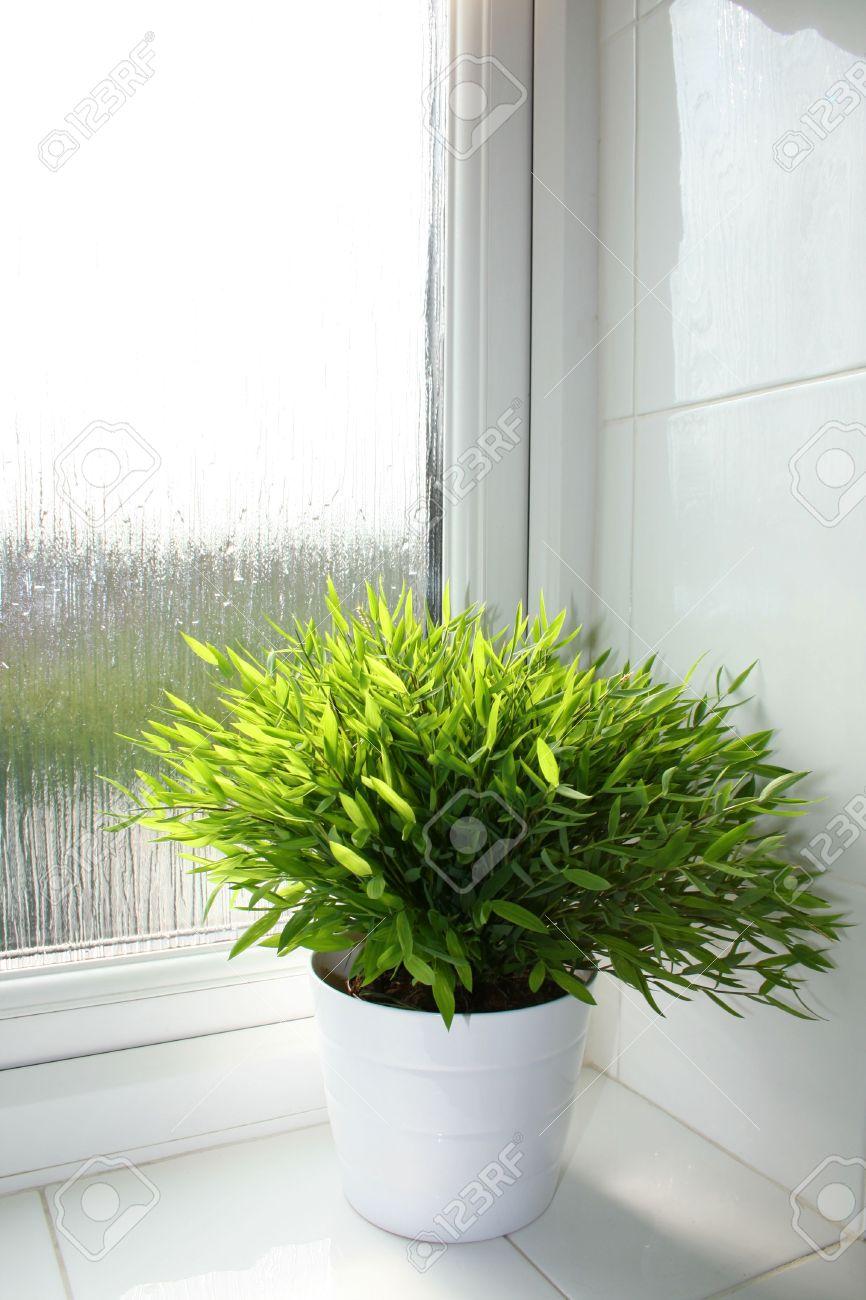 bamboe plant in een witte pot in een badkamer vensterbank royalty, Badkamer