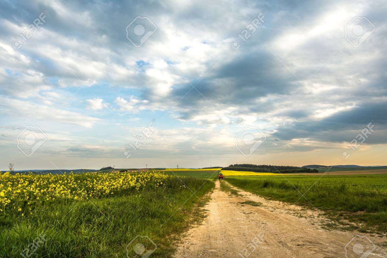 Road Going To Indefinite Yellow Rapeseed Fields Around It Blue And Colorful Sky Above