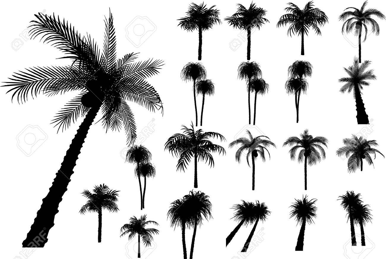 20 vector tropical palms and trees Stock Vector - 3250931