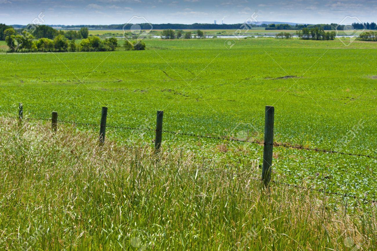 Wire fence along a green field on the open pasture Stock Photo - 12175177