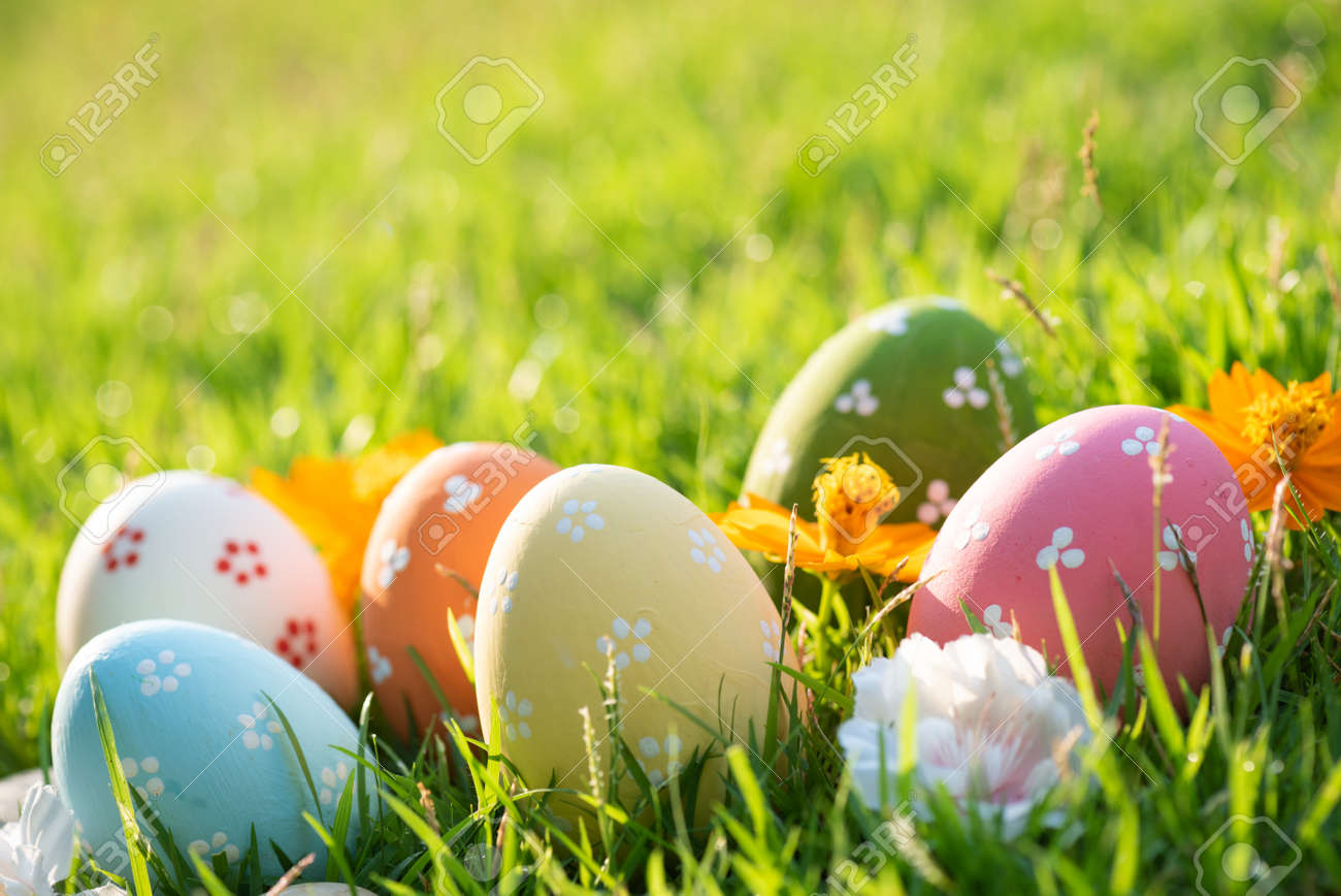 Happy easter! Closeup Colorful Easter eggs in nest on green grass field during sunset background. - 121242586