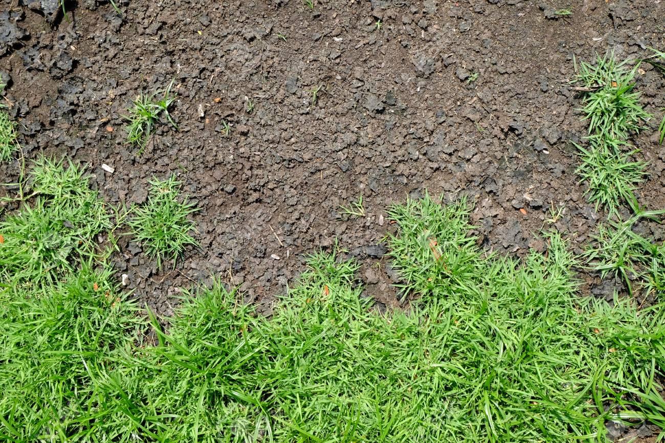 Terre fissurée et herbe verte. Texture de sol séchée