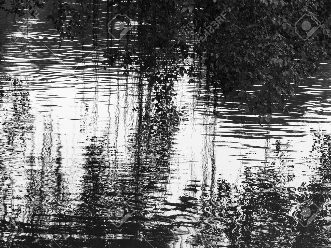 Abstract black and white wave tree on water reflection texture stock photo 66748775