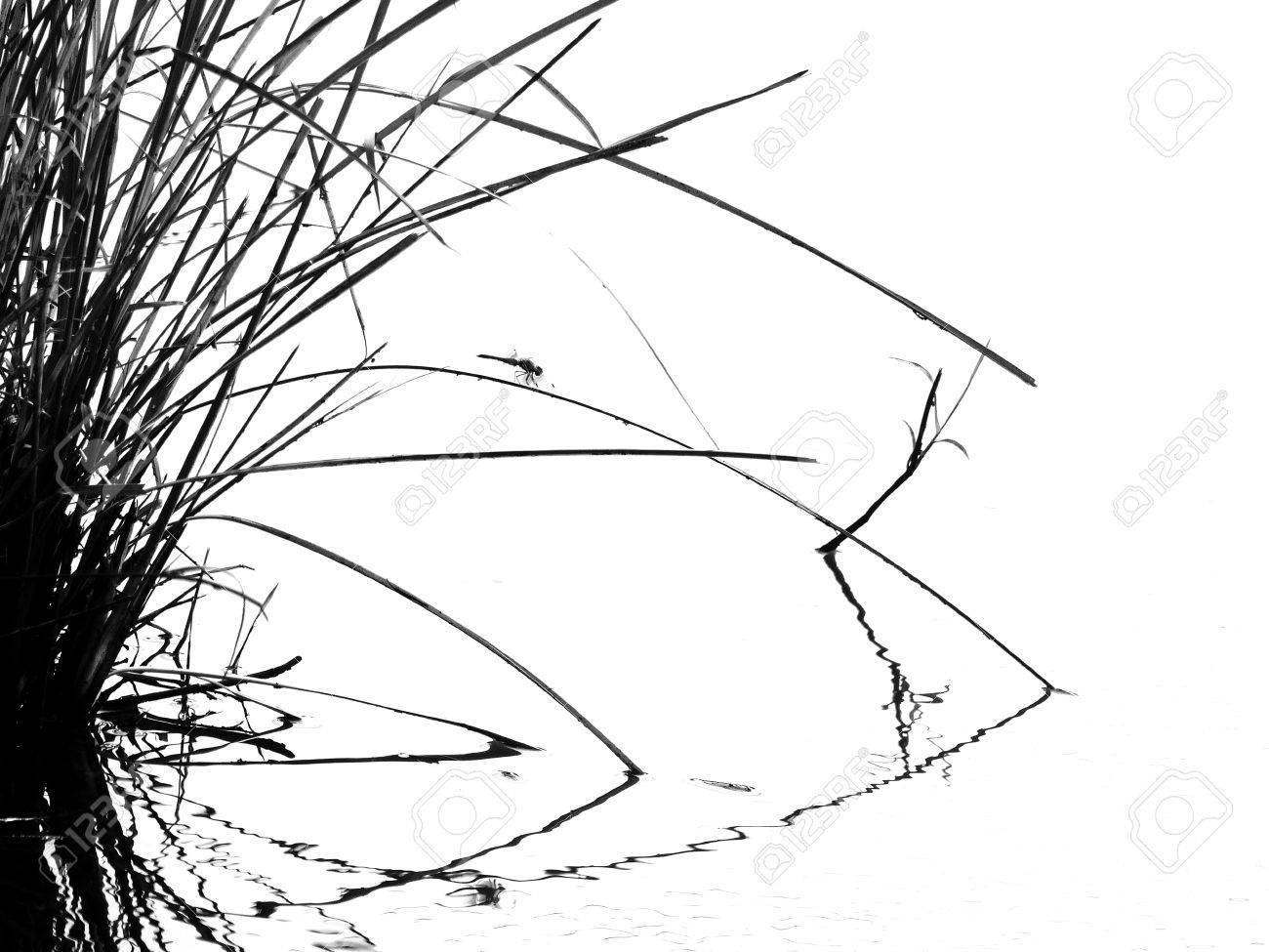 tall grass silhouette. Delighful Tall Stock Photo  Tall Grass Silhouette Black And White Inside Grass T