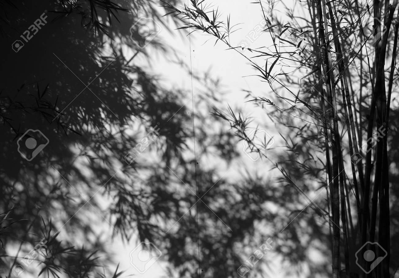 Pareti Con Foto In Bianco E Nero : Albero di bambù in bianco e nero con ombra sulla parete foto
