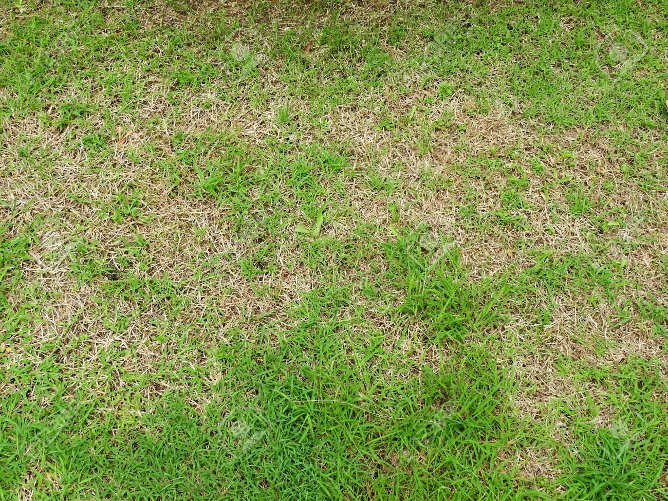 green grass and dry grass texture