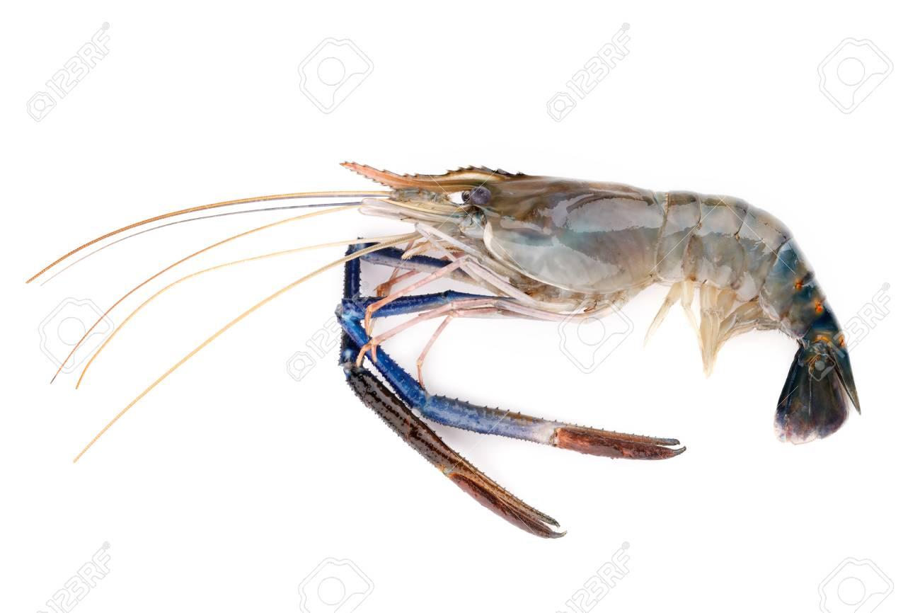Fresh shrimp,Giant freshwater prawn on white