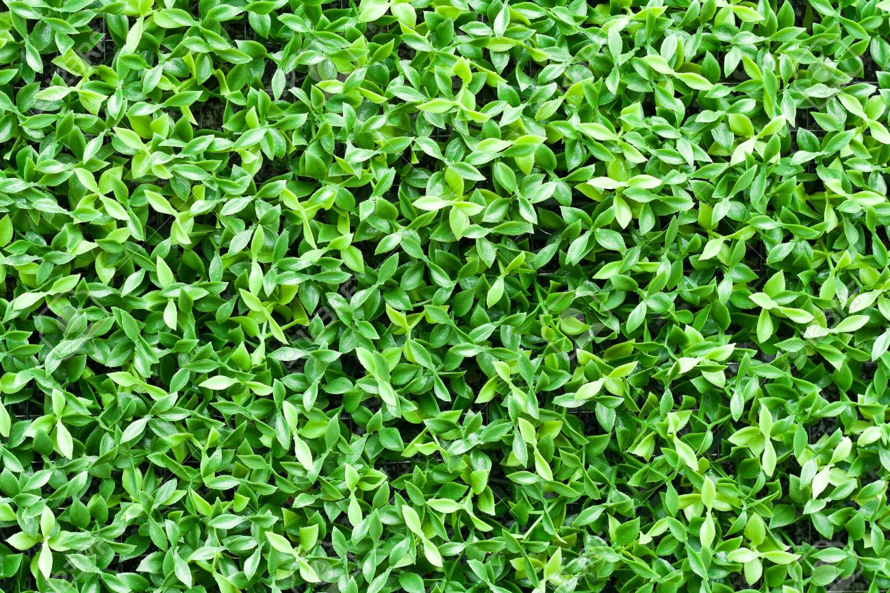 Artificial Tiny Green Leaves Texture For Background Stock Photo Picture And Royalty Free Image Image 15359888