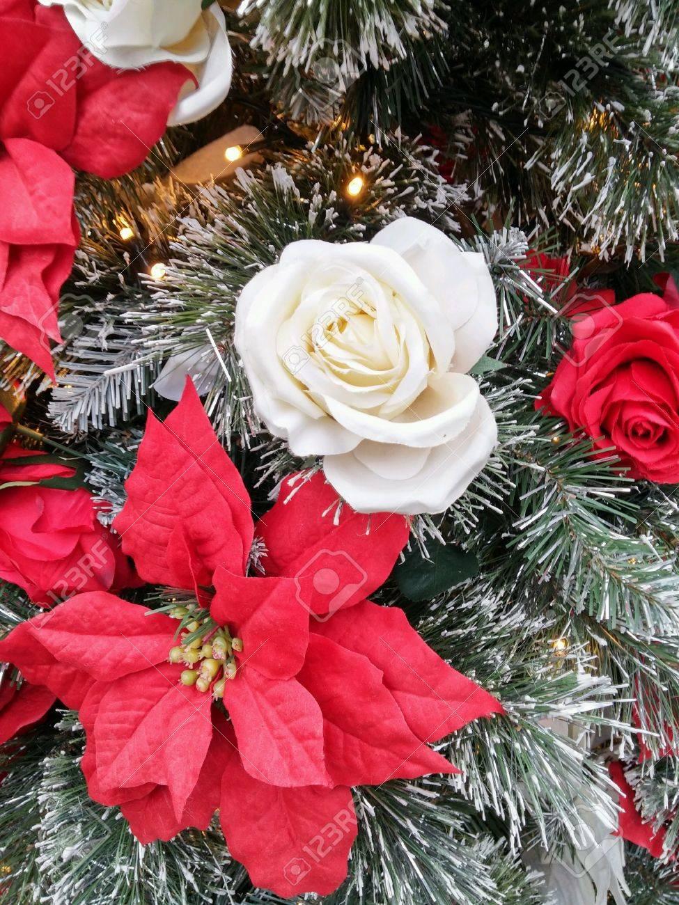 Weiße Rose Und Weihnachten Blume Mit Schnee Lizenzfreie Fotos ...