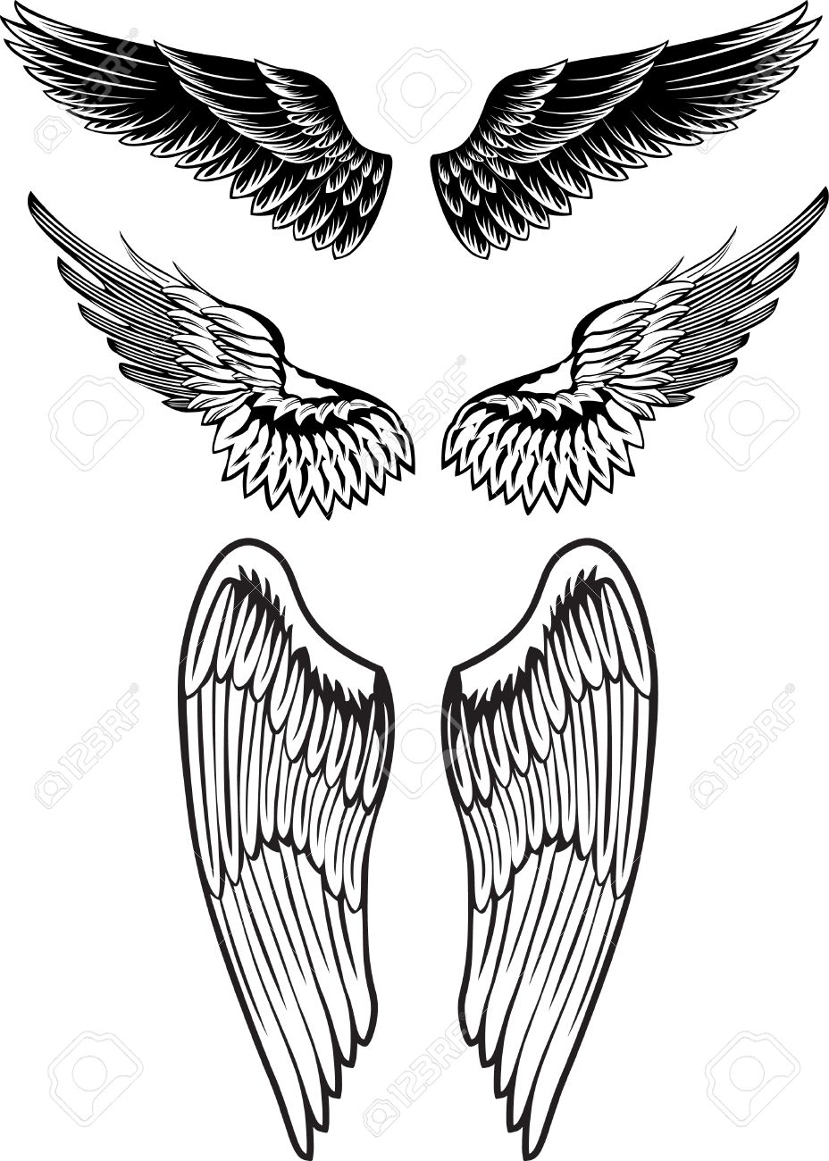 image wings Stock Vector - 6816495