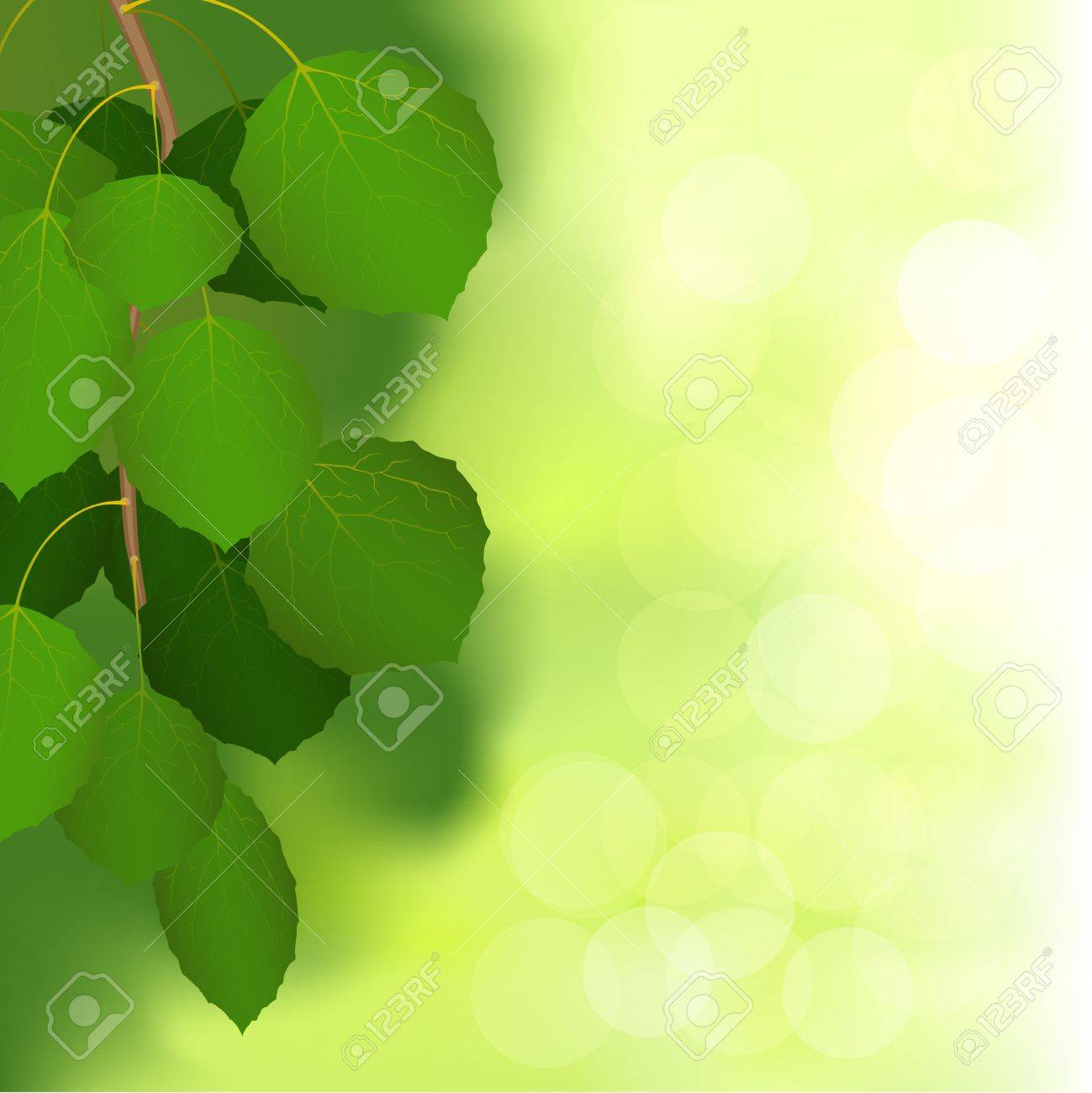Vector illustration birch branch on an unsharp background of nature Stock Vector - 14098087