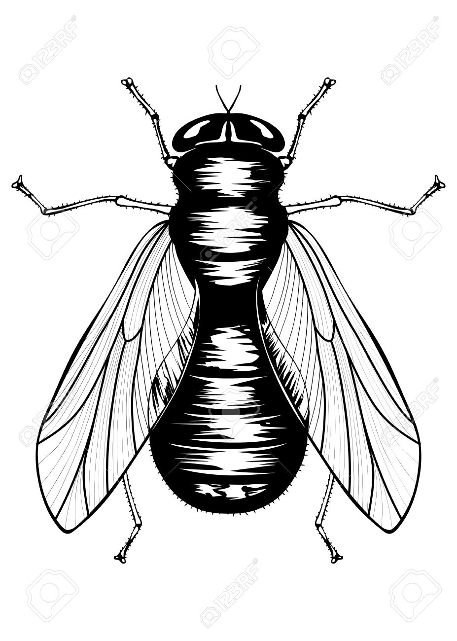 illustration of black fly royalty free cliparts vectors and stock rh 123rf com  flies clipart black and white