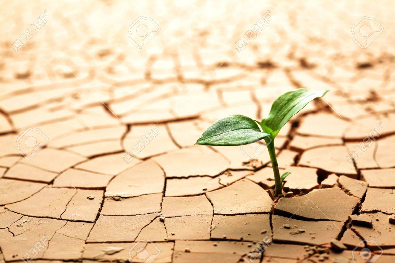 Plant in dried cracked mud Stock Photo - 10347824