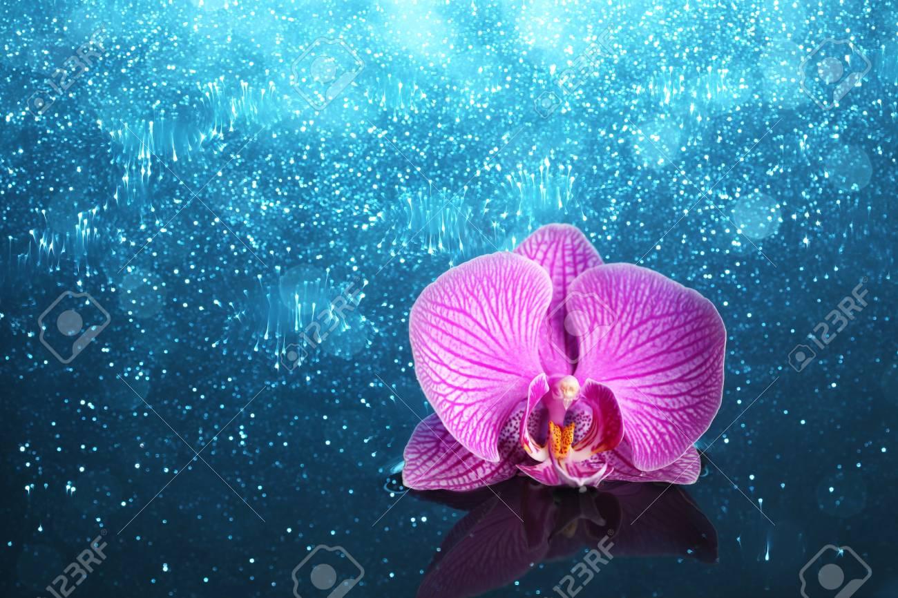 Luci per orchidee illuminazione orchidee phalaenopsis wikipedia
