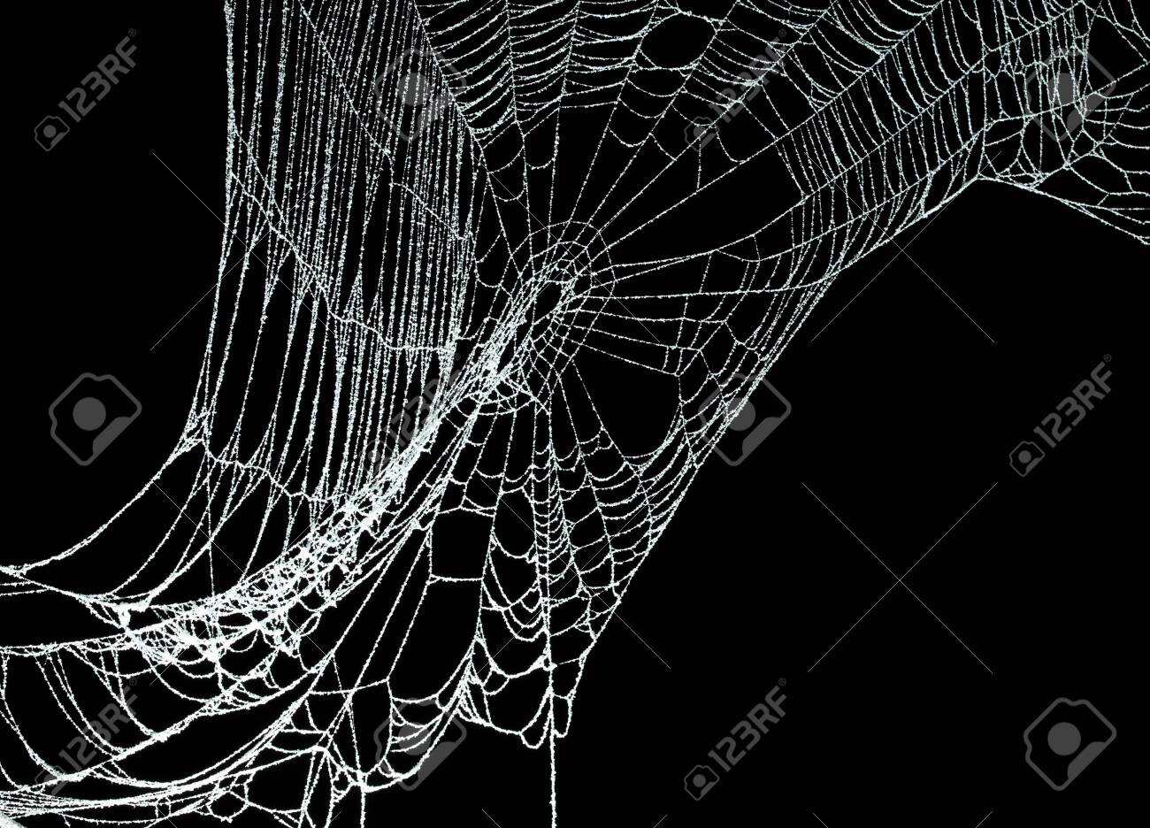 Real frost covered spider web isolated on black - 130060459