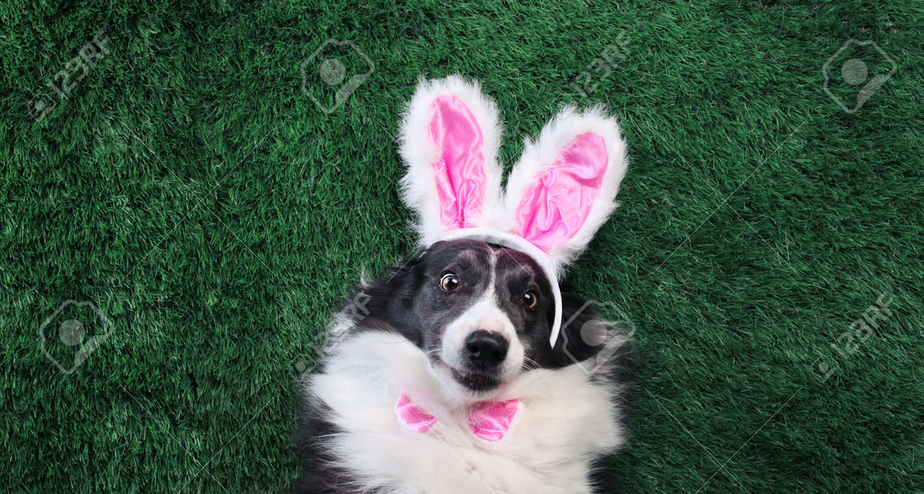 Happy dog with pink bunny ears laying on grass - 166138555