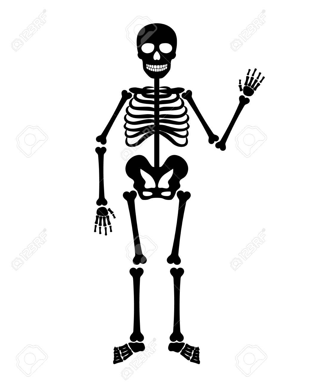 Skelet Voor Halloween.Skeleton Menselijke Anatomie Vector Halloween Zwarte Skelet Op Wit Wordt Geisoleerd