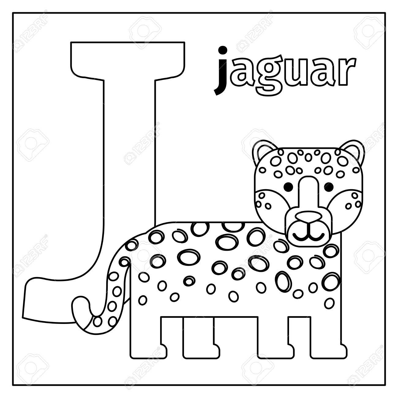 Dibujo Para Colorear O Tarjeta Para Los Niños Con Alfabeto Inglés Animales Del Zoo Jaguar Letra J Ilustración Vectorial