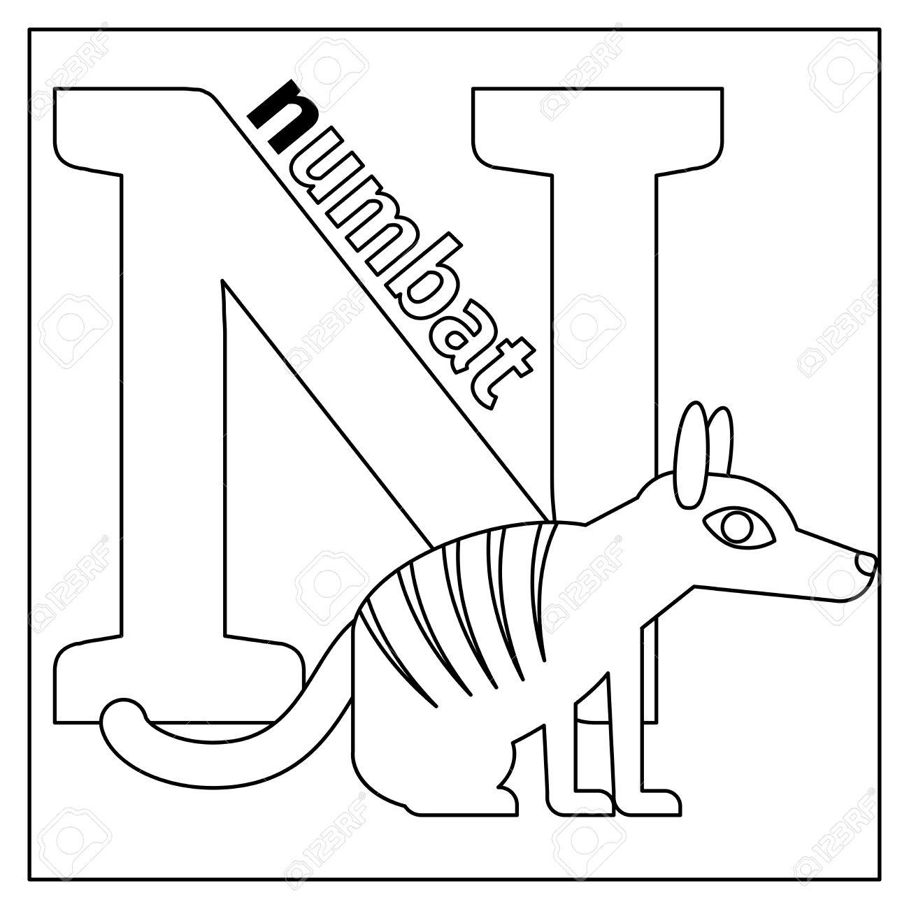 Dibujo Para Colorear O Tarjeta Para Niños Con Alfabeto Inglés Zoológico De Animales Numbat Letra N Ilustración Vectorial