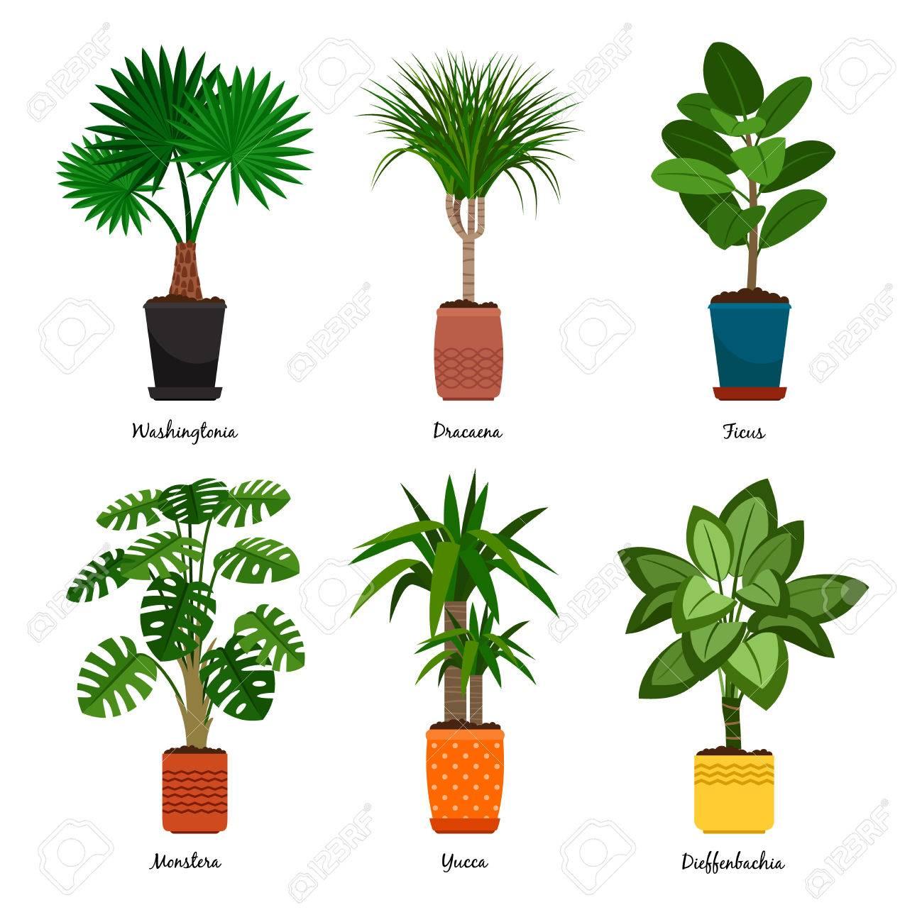 Decorative Houseplants In Pots Vector Illustration Florist Indoor