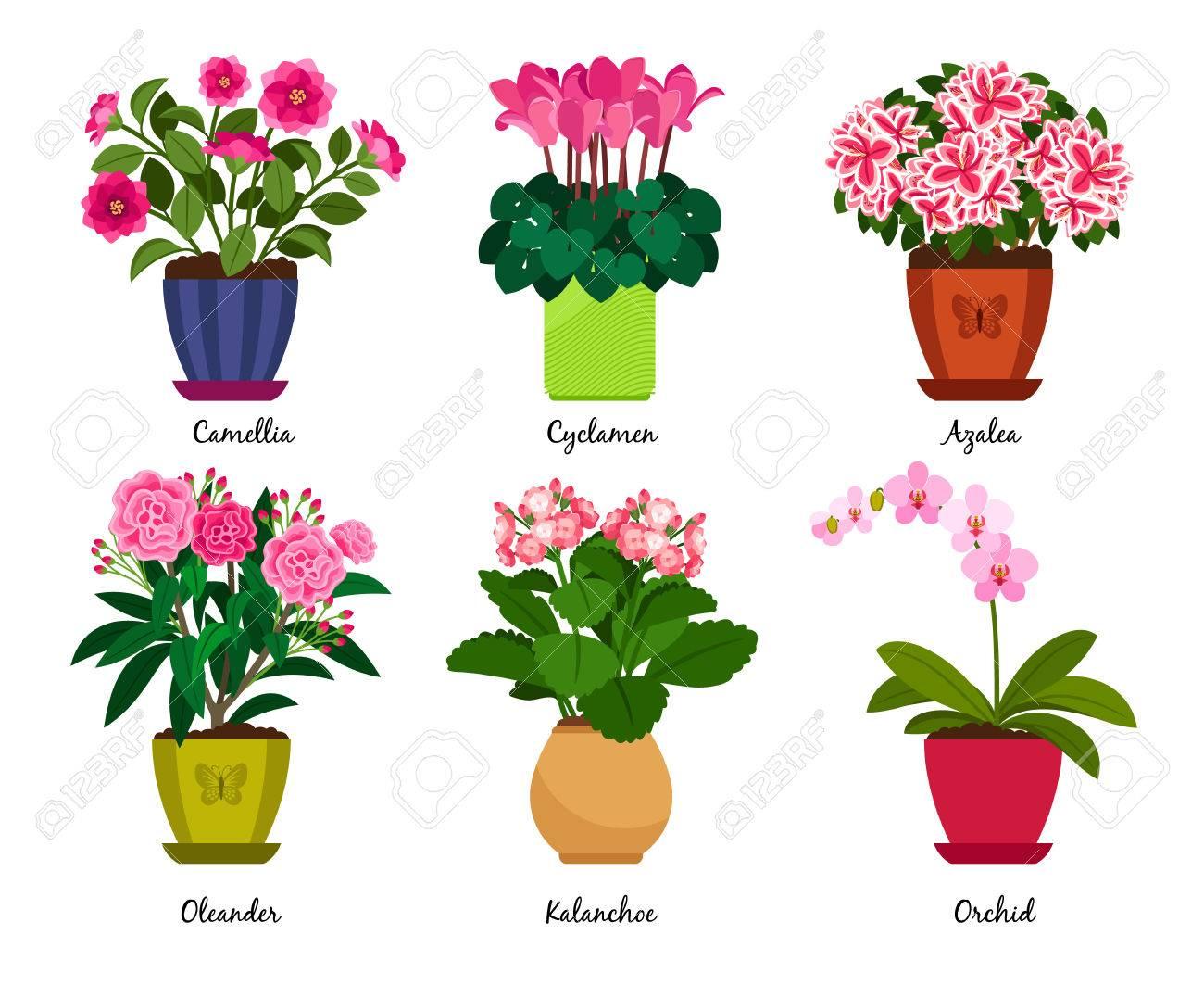 https://previews.123rf.com/images/ssstocker/ssstocker1708/ssstocker170800201/84909696-pots-de-fleurs-et-fleurs-de-plantes-d-int%C3%A9rieur-en-pots-cam%C3%A9lia-et-cyclamen-azal%C3%A9e-et-lauriers-roses-ka.jpg