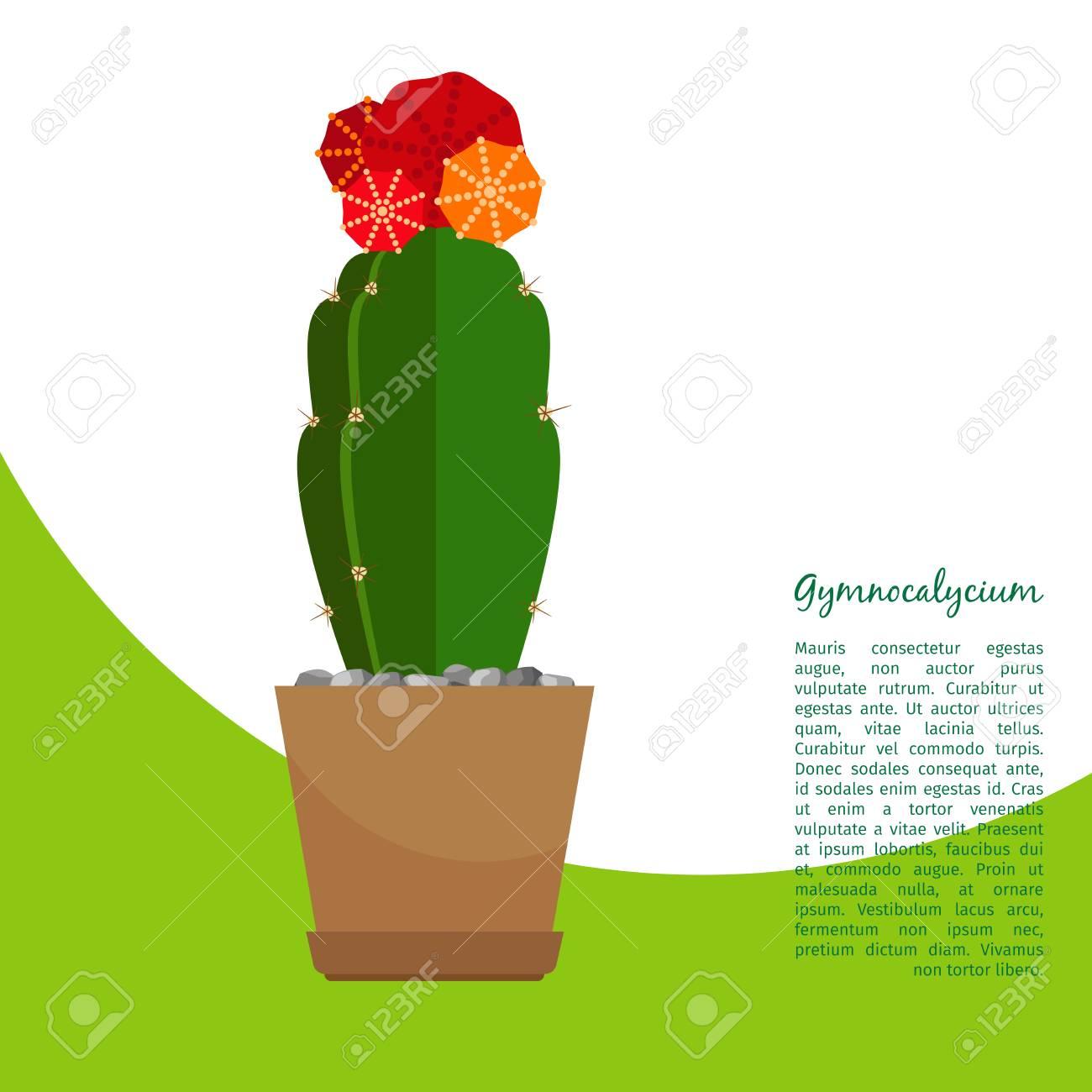 Gymnocalycium Indoor Plant In Pot Banner Template Illustration Stock Vector