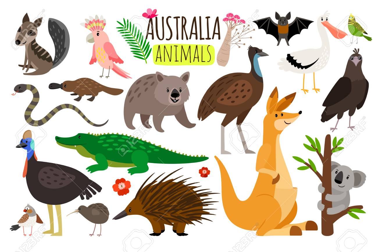 Australian animals. Vector animal icons of Australia, kangaroo and koala, wombat and ostrich emu - 98619658