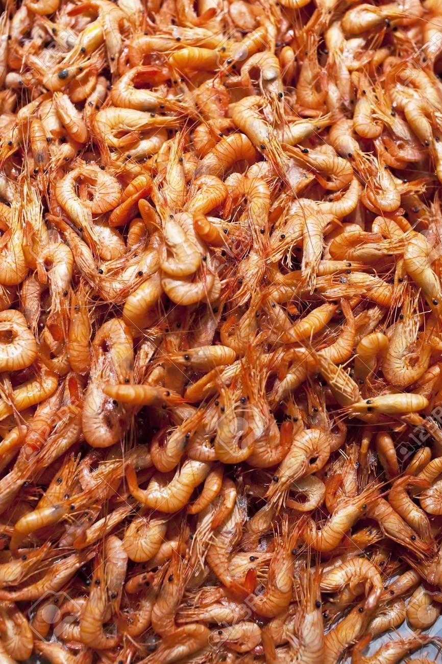 shrimps Stock Photo - 11582483