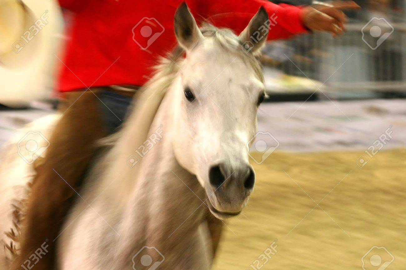 freestyle riding on equestrian show in Italy Stock Photo - 667851