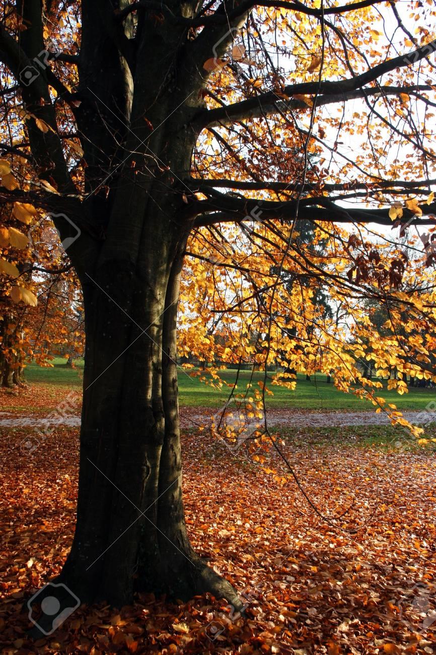 Autumn park scene Stock Photo - 11270364