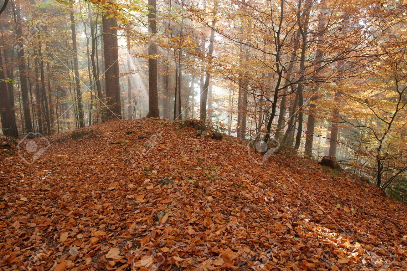Beautiful autumn colors in the forest - Fall Stock Photo - 2319603