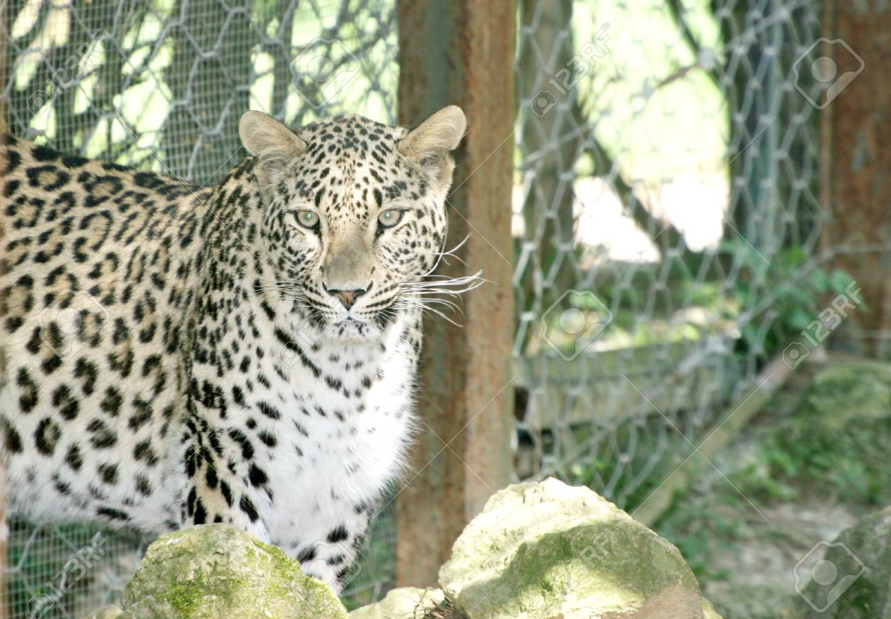 Leopard Stock Photo - 2651016