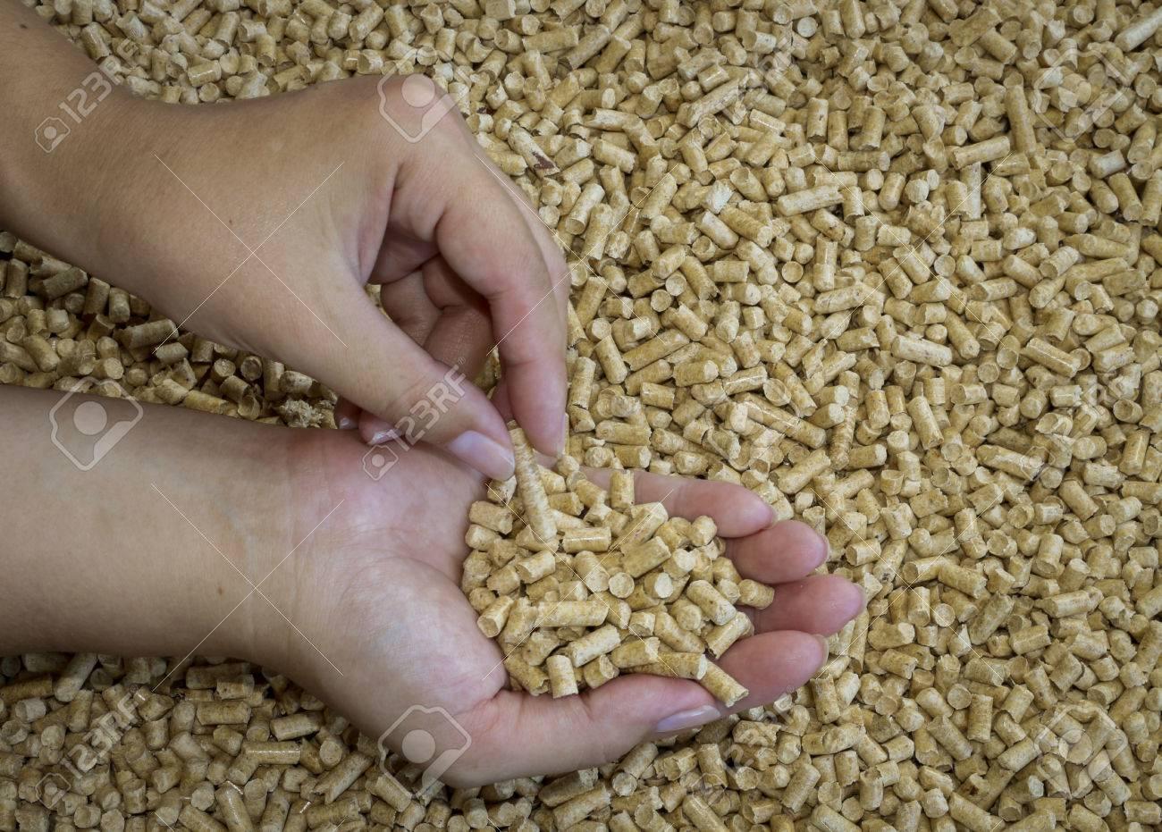 Holzpellets In Den Weiblichen Händen .Biofuels, Ein Alternativer ...