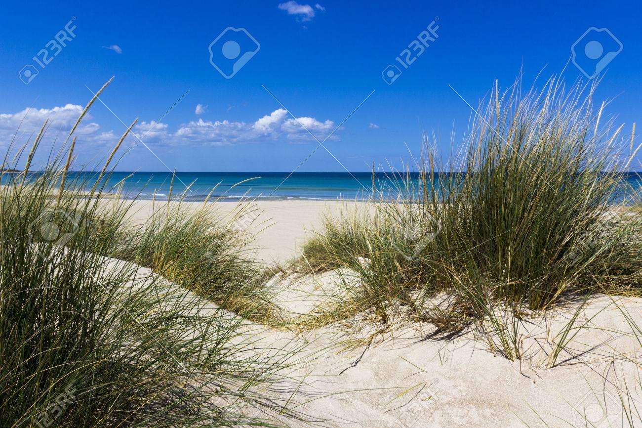 Salento Lecce: the sea, the beach and sand dunes - 57044252