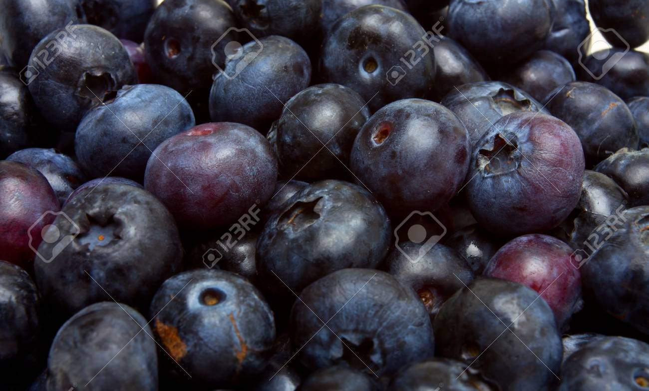 Abstract blueberries from low perspective isolated on white. Stock Photo - 7740760