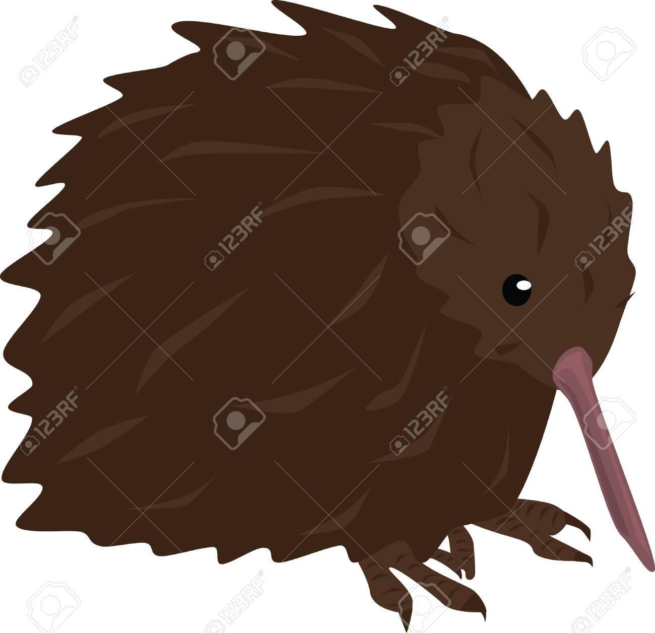 A Kiwi bird is native to New Zealand. Stock Vector - 15419683